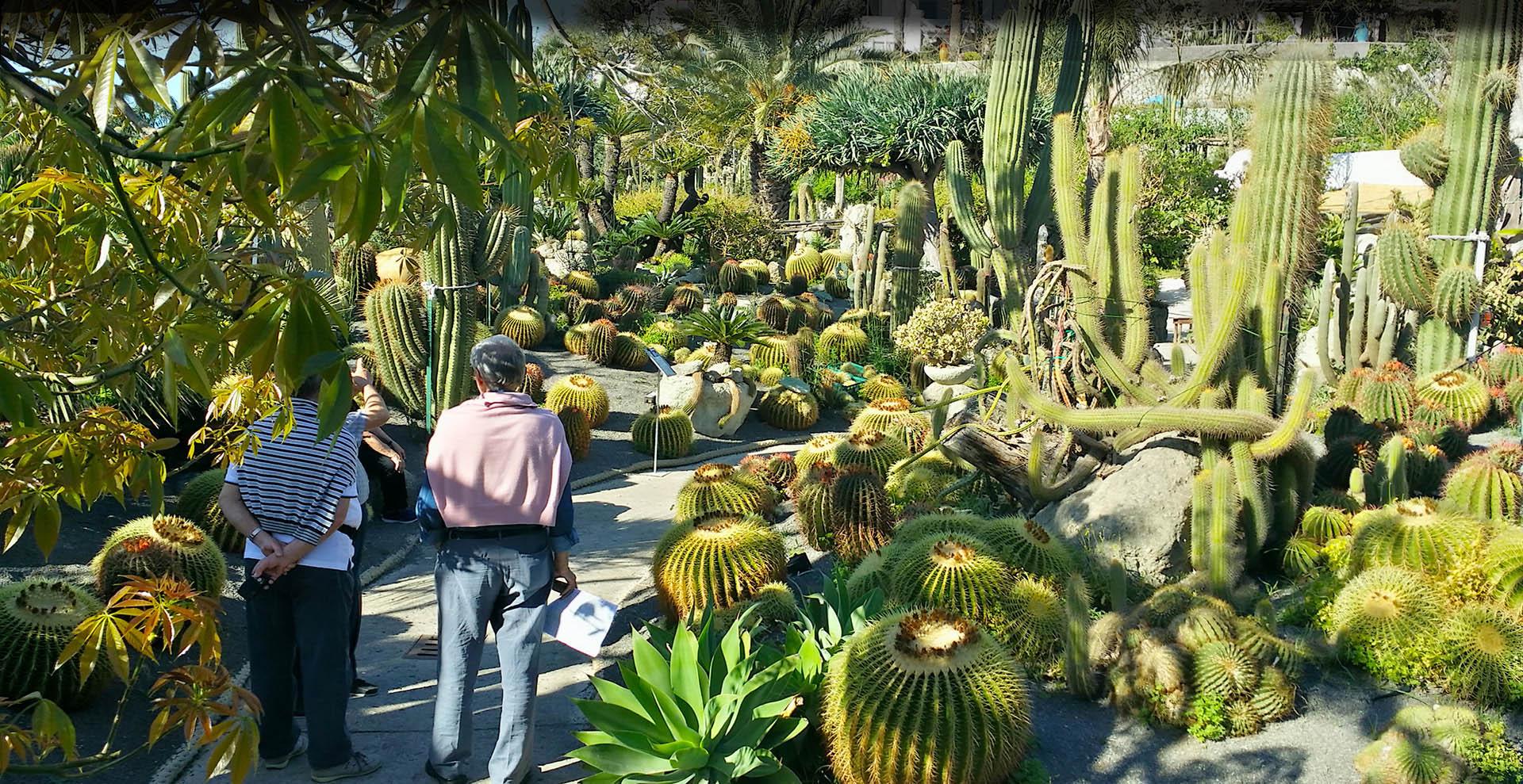 Ischia Giardino Botanico Ravino Pagina Ufficiale Cactus